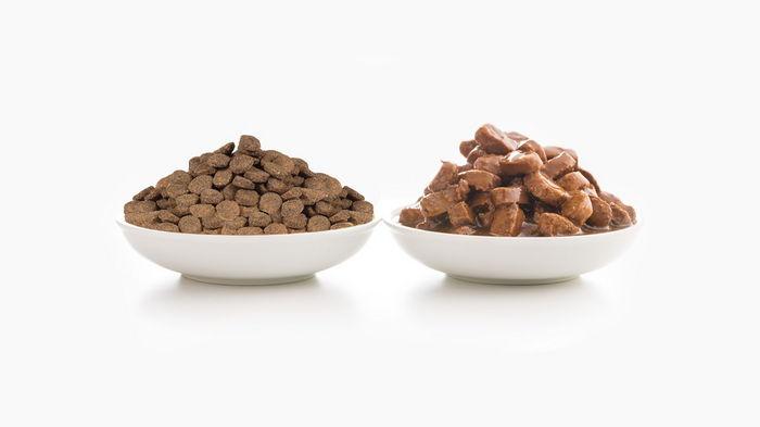 Что выбрать: сухой корм или консервы для кошек