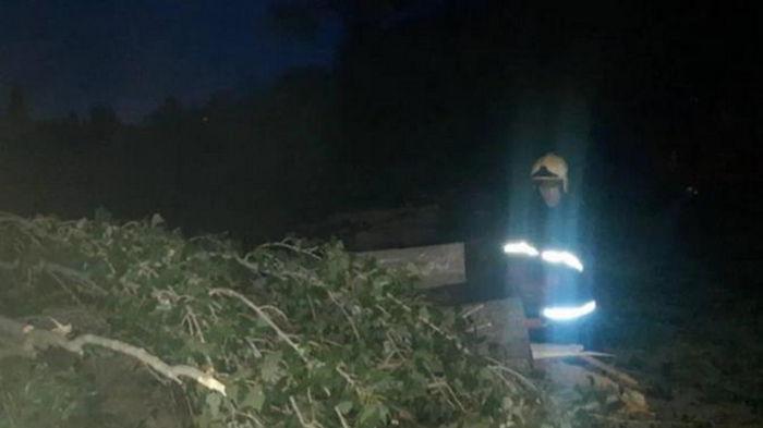 В Виннице ураган валил деревья, пострадала женщина (видео)