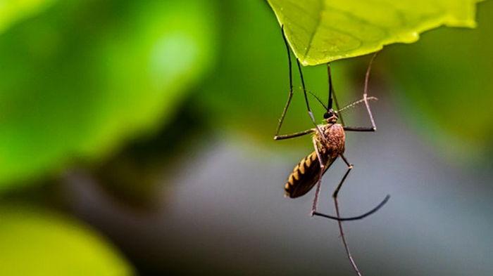 В Харькове зарегистрирован завозной случай тропической малярии
