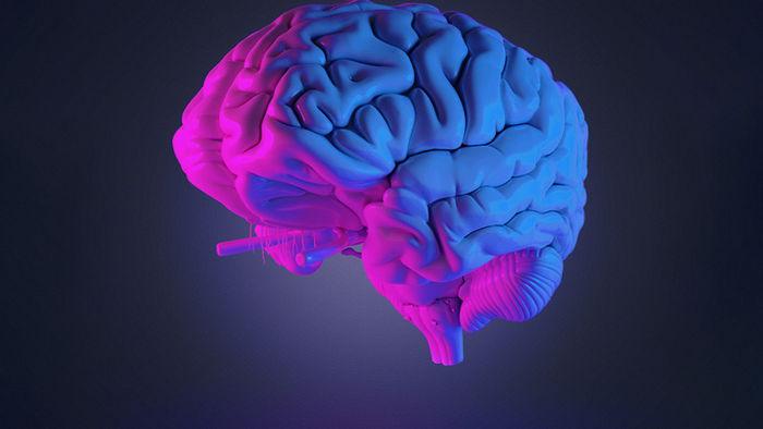 Мозг используется лишь на 10%: ученые выбрали самый популярный и бестолковый миф