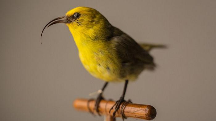 В США объявили вымершими 23 вида существ