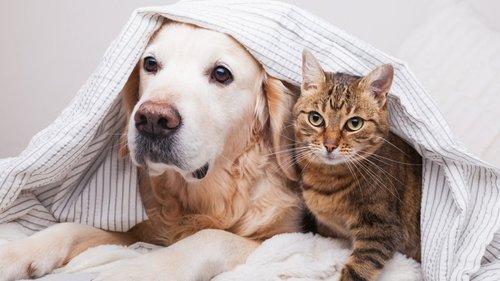 Кошки против собак. Ученые пытаются выяснить, какое животное самое умное