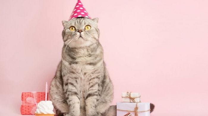 День рождения кошки закончился массовой госпитализацией